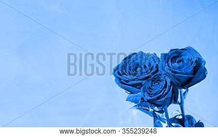 Blue Roses With Dew Drops On A Vintage Blue Background. Spring Background With Roses, Copy Space For