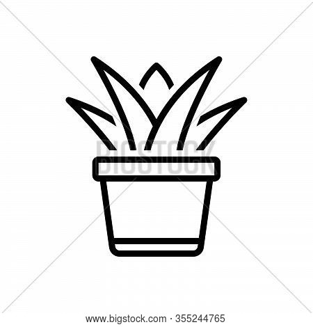 Black Line Icon For Succulent-plant Succulent Plant Aloe-vera Nature Herbal Floral Green Juicy Pulpy