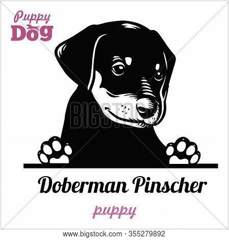 Puppy Doberman Pinscher - Peeking Dogs - Breed Face Head Isolated On White