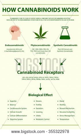 How Cannabinoids Work Vertical Infographic Complete