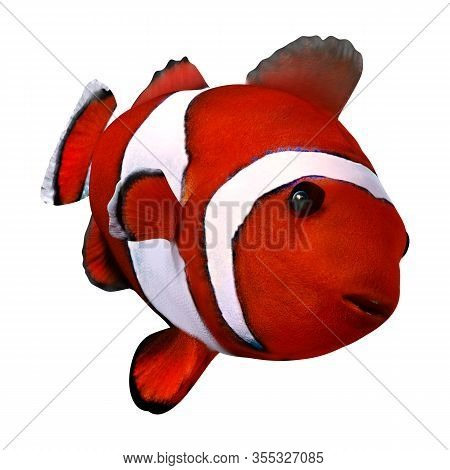 3D Rendering Red Clownfish On White