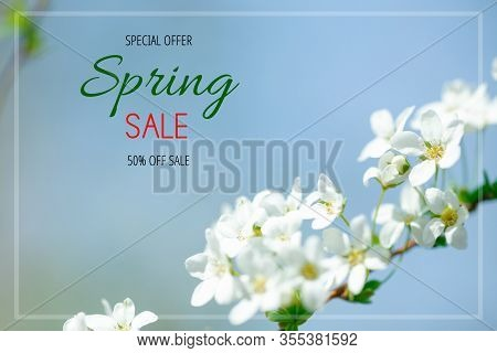 Text Spring Sale. Cerasus Besseyi L.h.bailey Lunell White Small Flowers On Branches. Dwarf Cherry Bl