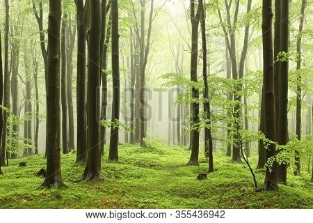 Trail footpath trees spring forest Nature background mist fog alley Nature background Path pathway parkway Road fresh lush Nature background leaves foliage green Travel Nature background Nature background Nature background tree Nature background woods.