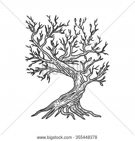 Tree Without Leaves Sketch Engraving Vector Illustration. T-shirt Apparel Print Design. Scratch Boar