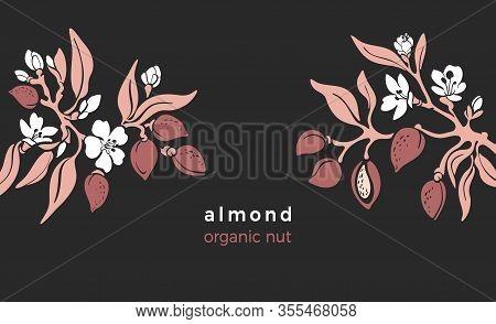 Almond Template. Vector Natural Nut. Natural Tree, Botanical Branch, Fruit, Leaf, Flower In Bloom. A