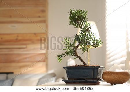 Japanese Bonsai Plant And Oil Diffuser On Table In Living Room, Space For Text. Creating Zen Atmosph