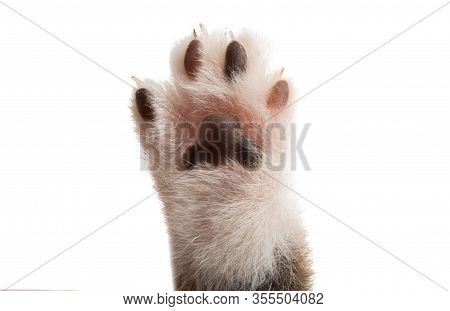 Animal Cat Paw Isolated On White Background