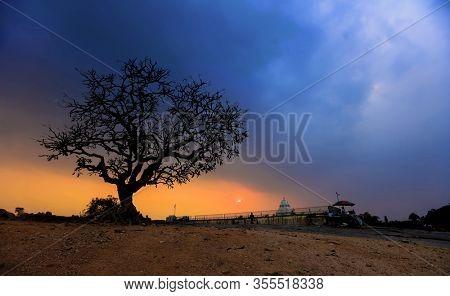 ingle big tree against sunset at Lalbagh, Bangalore, India