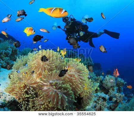 Underwater Photographer on scuba with Clownfish and Anemones