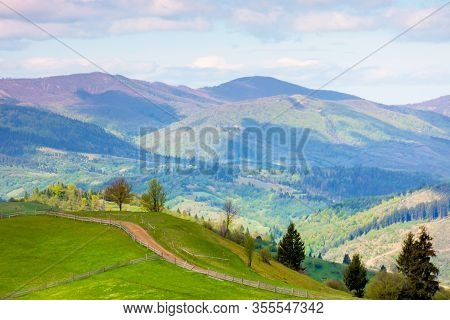 Rural Landscape In Mountains. Trees Along The Path Through Grassy Hill. Beautiful Nature Scenery In