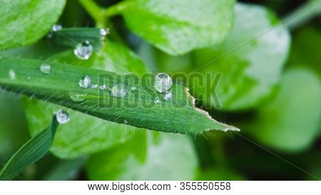 Close-up Details Of Globs Of Water Sitting On Leafy Plants.