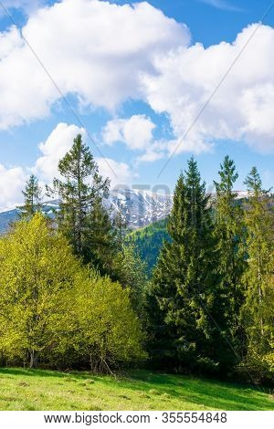 Beautiful Landscape In Springtime. Forest On The Meadow. Mountain Ridge Beneath A Blue Sky With Fluf