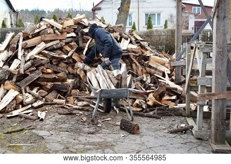 Young Man In Gloved Hand Throwing Firewood In Old Metal Wheelbarrow And Pile Of  Firewood On Backgro