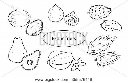 Set Of Exotic Fruits. Guanabana, Coconut, Figs, Pataya, Avocado, Carambola.