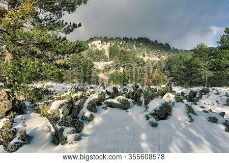snowy landscape of volcanic rock and pine forest in Etna Park, Sicily