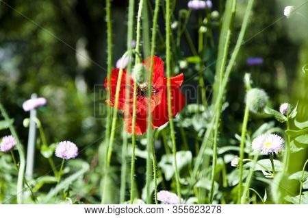 Serenity. Anzac Day. Poppy Seeds To Relieve Pain. Summer Nature Beauty. Spring Is Coming. Bright Red