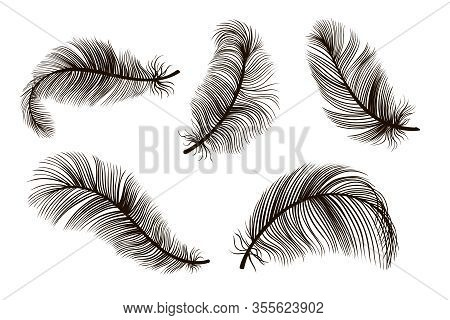 Black Black Feather Hand Drawing Vintage Set. Detailed Feathers Sketch. Bird Plume Collection Vector