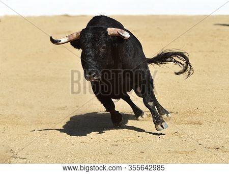 A Bravery Bull With Big Horns Running On Spanish Bullring