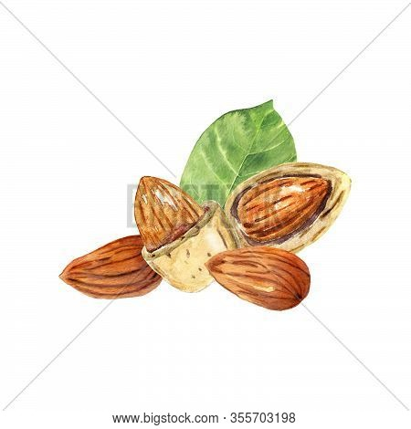 Watercolor Almonds Isolated On White. Hand Drawn Illustration Of Almond Nuts. Ingredients For Recipe
