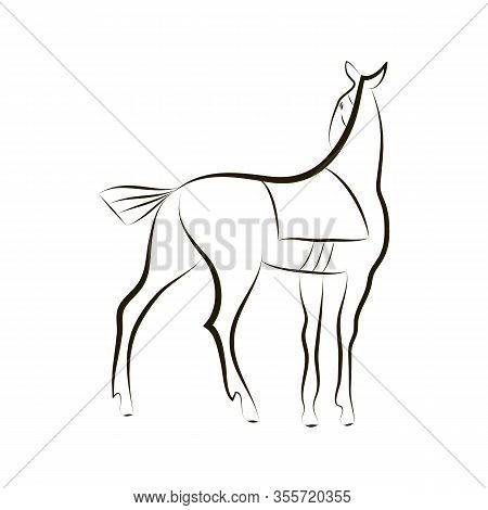 Hand Drawing Of Standing Horse. Graceful Stallion On White Background. Black And White Vector Outlin
