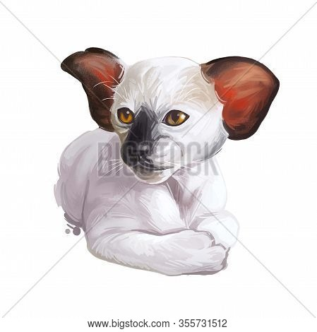 Oriental Shorthair Kitten With Large Ears Digital Art Illustration. Watercolor Portrait Of Siamese K