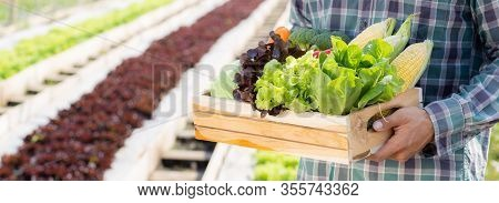Portrait Young Asian Man Smiling Harvest And Picking Up Fresh Organic Vegetable Kitchen Garden In Ba