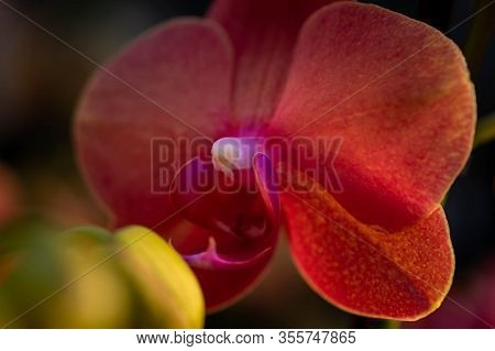 The Magical World Of Orchids Raise Up Your Phantasy