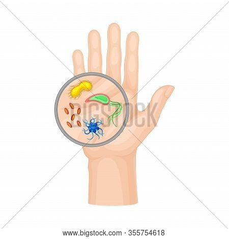 Bacteria And Microbes Examining Under Magnifying Glass On Hand Vector Illustration