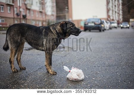 A Stray Dog Is Wandering On The Street. A Cute Dog Is Looking For A Master. Poor Thing Freezes In Th