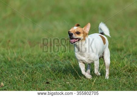 Doggy, Walking, Sweet, Garden, Fast, Healthy, Smile, Playing, Motion, Walk, Looking, Happiness, Ador