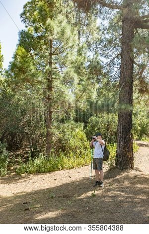 A Young Traveler In A Cap With A Backpack Stands In The Shade Of A Pine Tree And Takes Pictures. Pin