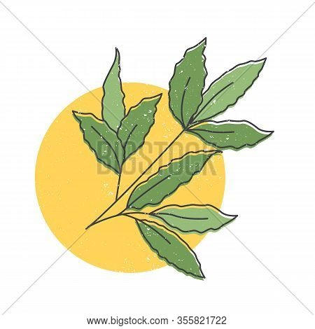 Bay Leaves Hand Drawn Icon, Branch Of Laurel Bay Leaves Colorful Vector Illustration For Printing