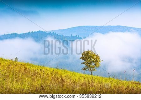 Lonely Mapple Tree On A Hill In A Wild Nature. Beautiful Idyllic Landscape. Carpathians, Ukraine, Eu
