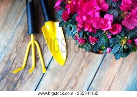 Flower Potting And Spring Garden Works Background. Garden Tools And Blossom Azalea Flower On A Woode