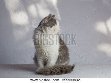 Funny Kitten At Home. White And Gray Cat
