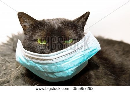 Portrait Of A Common, Funny Black Cat With Green Eyes And Face Mask. Concept Of Illness Of Pet And V