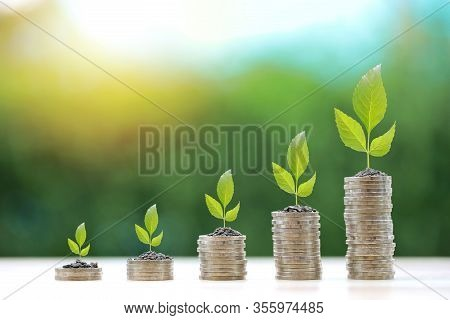 Business Investment And Saving Growth For Advertising Concept. Plant Or Tree Grow On Stacking Coin O