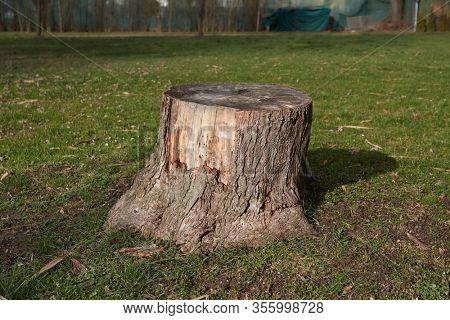 Cut tree trunk stump in a park