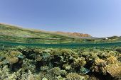 Half and Half (Split Image or Over Under) of Coral Reef, Water Surface and Sinai Desert in Egypt poster