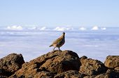 Bird standing on rocks high above the clouds poster