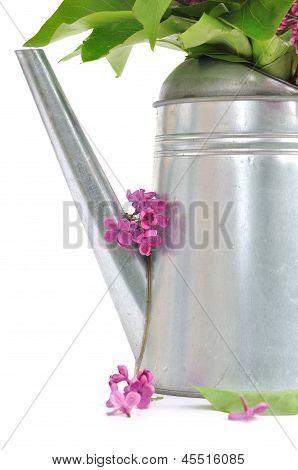 Petals Of Lilac