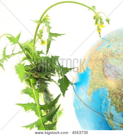 Globe Land Plants.