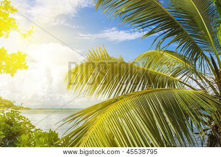 La Digue Island, Seyshelles, Anse Source D'argent. Tropical Forest
