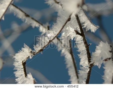 Icy Branch