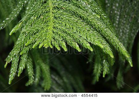 Evergreen Atrium