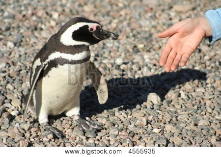 Handshake With Penguin