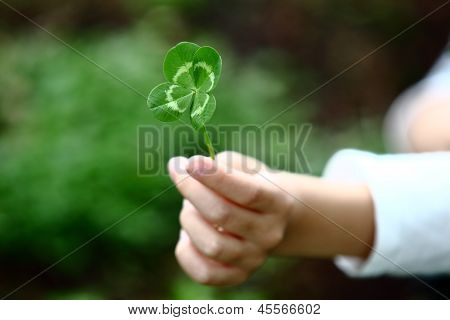 Four-Leaved Clover in a Childs Hand