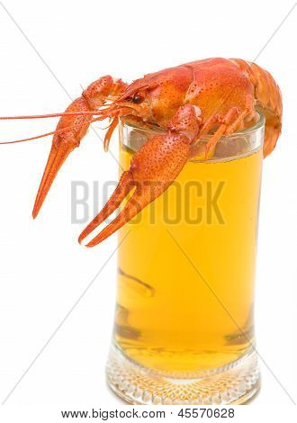 boiled crawfish and a glass of light beer close up on a white background. vertical photo. poster