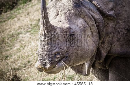 Indian one horned rhinoceros at Royal Chitwan national park in Nepal