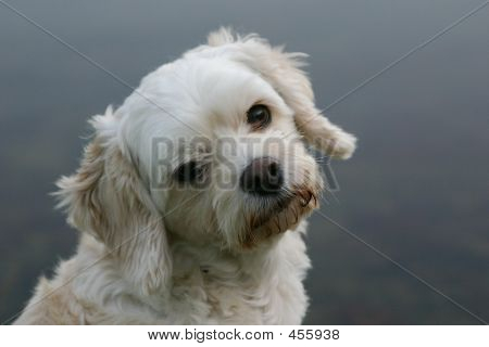 Very Cute Dog Or Puppy Photo